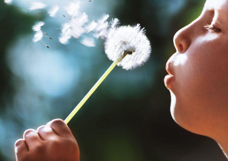 spring_allergies_hayfever_pollen_dandelion_seeds-2-750x529