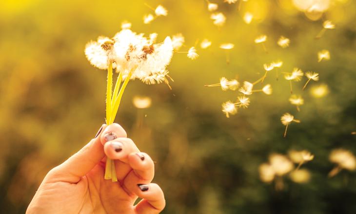 spring_allergies_hayfever_pollen_dandelion_seeds