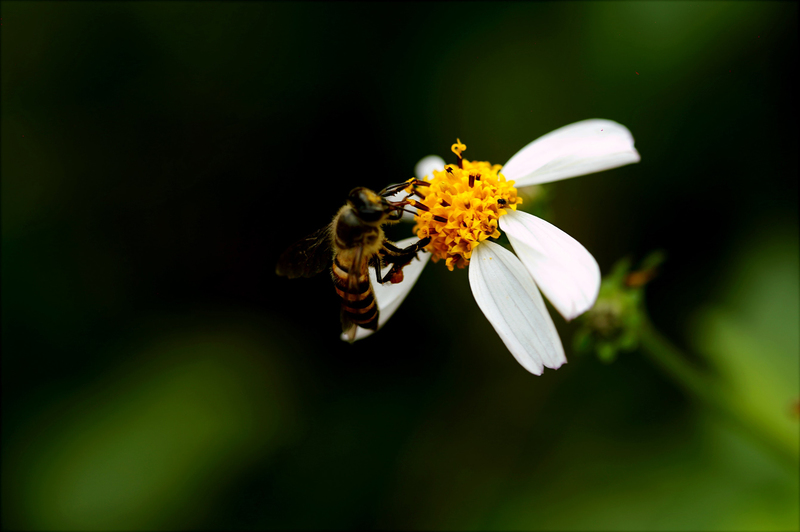 2019-11-20_pollen